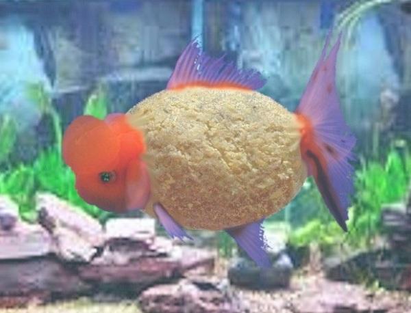 passover fish